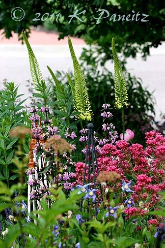 2011 June Garden4