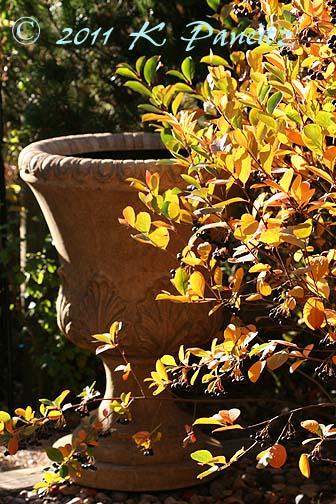Fall viburnum & urn