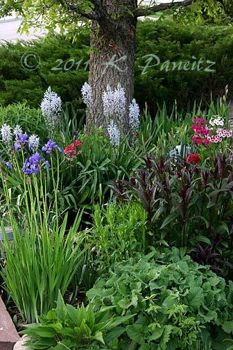 2011 Spring Garden5