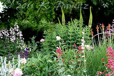 2011 June Garden3