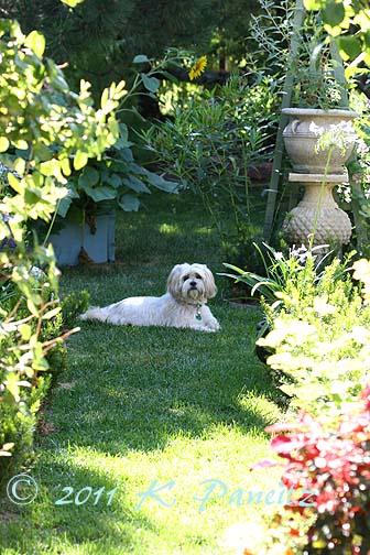 Butter in the garden