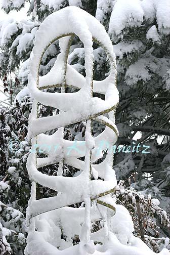 2011 Nov Snow pics5