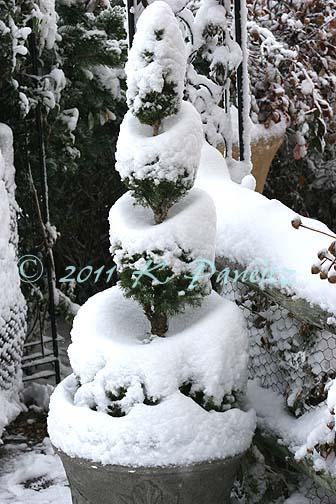 2011 Nov Snow pics4