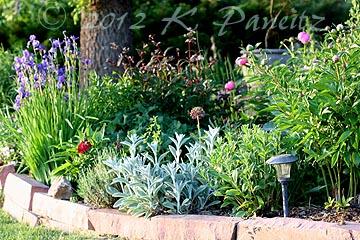 2012 Front Garden1
