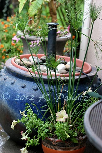 Water feature with papyrus