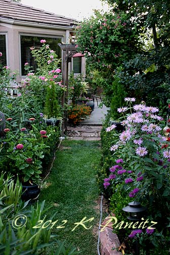 2012 July Back Garden6