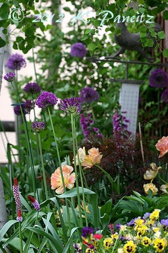 2012 Back garden