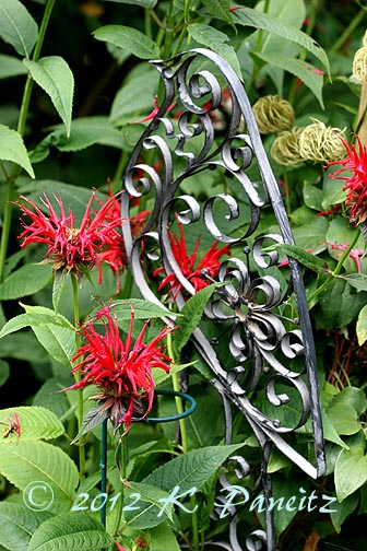 Monarda 'Jacob Cline'&bird stake