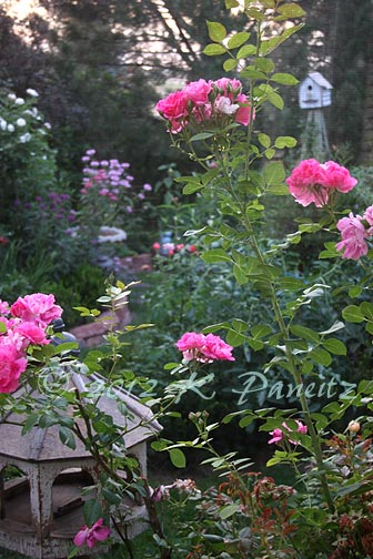 2012 July Back Garden