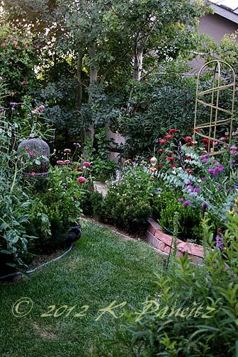 2012 July Back Garden7