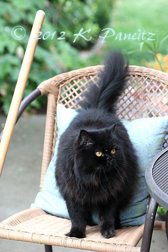 Regis on Chair1