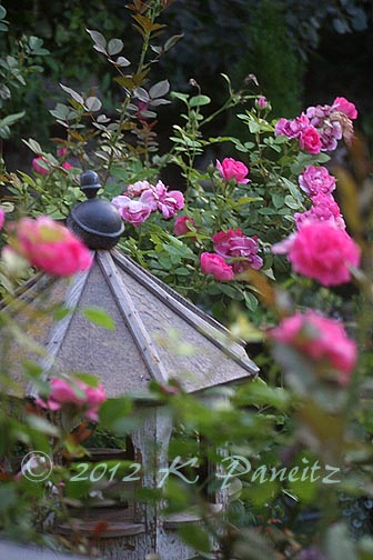 Antique Birdfeeder & Roses