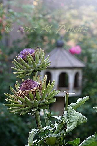 Artichoke spent blooms