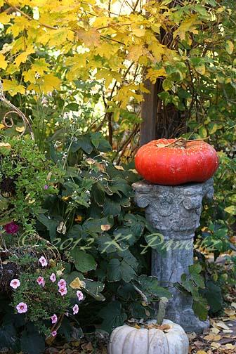 2012 Oct Garden9