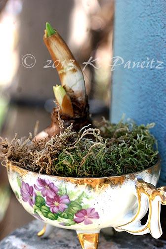 Bulb & Teacup