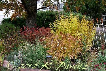 2012 Oct Garden10
