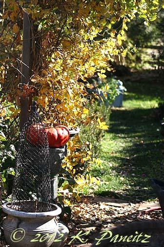 2012 Nov Garden