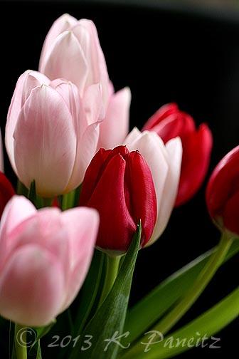 Valentine tulips1