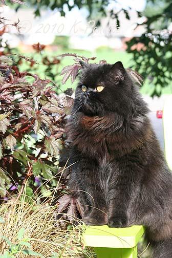 Regis in the garden