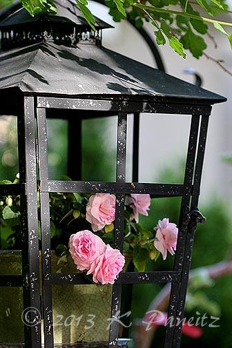 Lantern & Dbl Pink Impatiens5