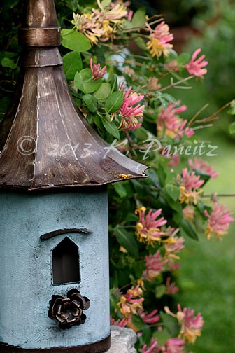 Birdhouse & honeysuckle