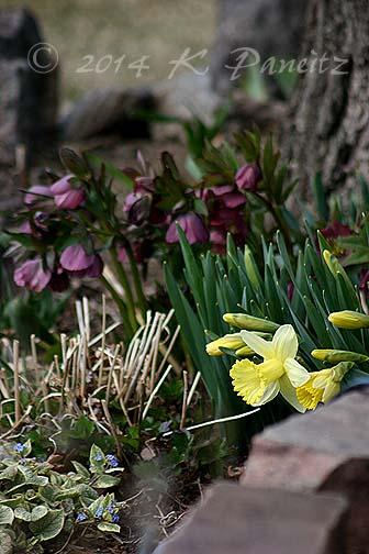 2014 Spring
