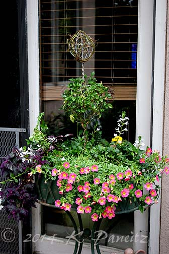 2014 Ivy Topiary Container3