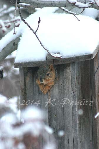 Squirrel in Flicker Box