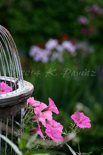 2014 June Garden4