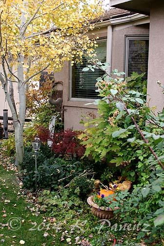 2014 Nov Garden2