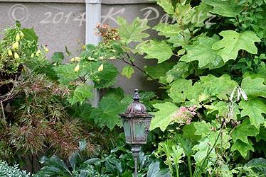 Oakleaf Hydrangea border