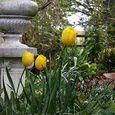 2015 Spring garden5