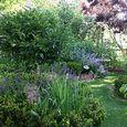 2015 June Back Garden1