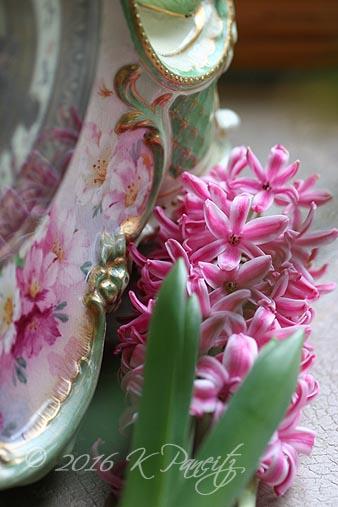 Pink Hyacinth1