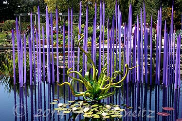 Chihuly Glass Exhibit12