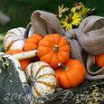 Vintage toolbox & Pumpkins1
