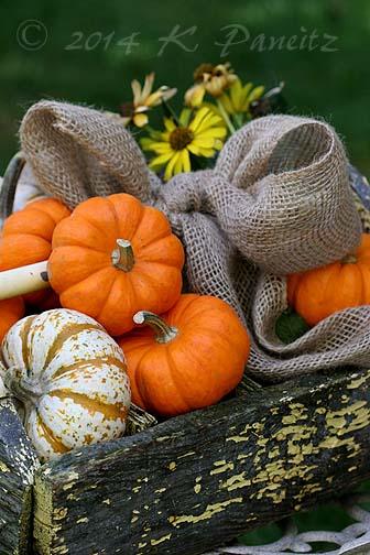 Vintage toolbox & Pumpkins2