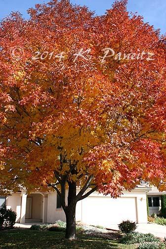 2014 Ash Tree