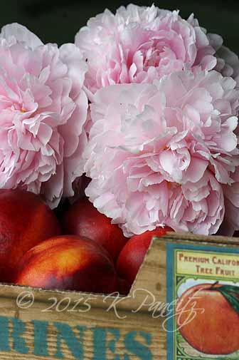 Peonies & Nectarines
