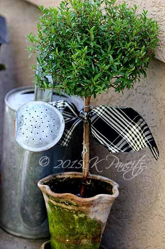 Myrtle Topiary5