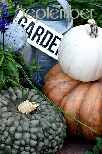 2015 Fall Pumpkins4
