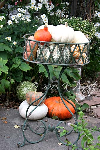 Vintage planter and pumpkins2