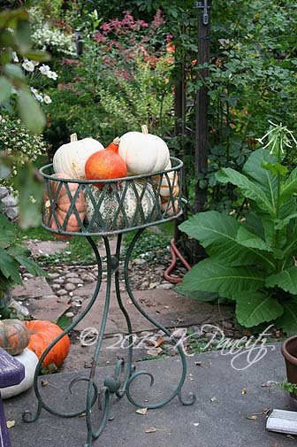 Vintage planter and pumpkins4
