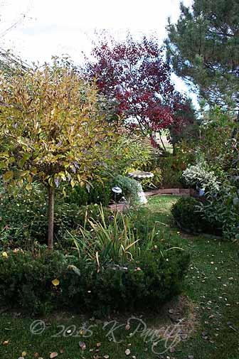 2015 Nov Back Garden