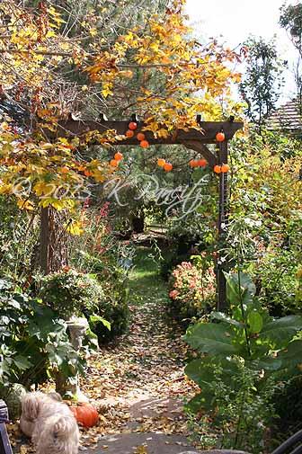 2015 Nov Back Garden7