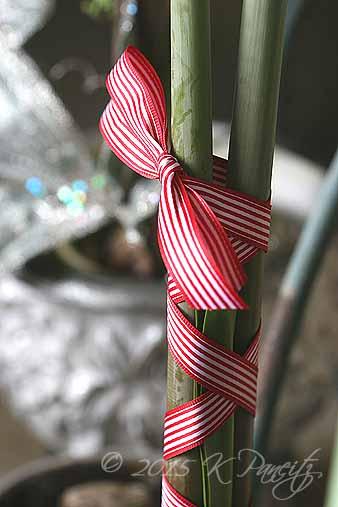 Amaryllis Ribbon2