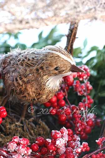 Noel Bird Nest
