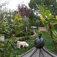 Backyard project4