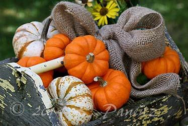 Vintage toolbox & Pumpkins