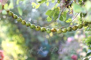 Apple garland3